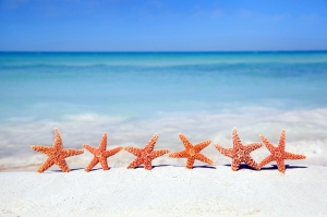 starfish dancers